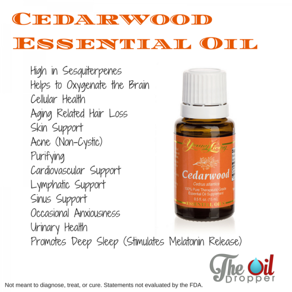 Cedarwood Essential Oil  The Oil Dropper