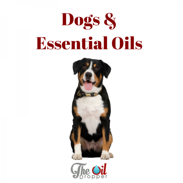 Young Living Essential oils and dogs
